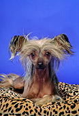 DOG 19 DC0118 01