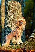 DOG 19 DC0120 01