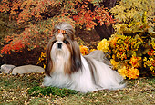 DOG 19 FA0004 01