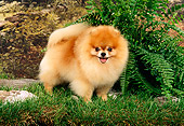DOG 19 FA0005 01