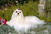 DOG 19 FA0007 01