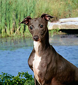 DOG 19 FA0008 01
