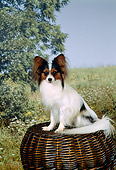 DOG 19 FA0009 01