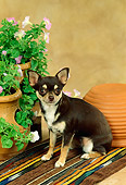 DOG 19 FA0011 01