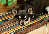 DOG 19 FA0012 01