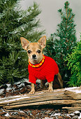 DOG 19 FA0013 01