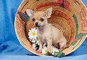 DOG 19 FA0014 01