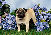 DOG 19 FA0017 01