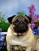 DOG 19 FA0019 01