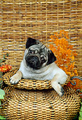 DOG 19 FA0020 01