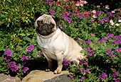 DOG 19 FA0022 01