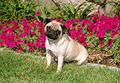 DOG 19 FA0024 01