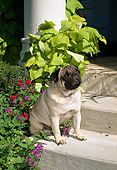 DOG 19 FA0027 01