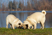 DOG 19 KH0008 01