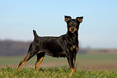 DOG 19 KH0012 01