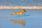 DOG 19 KH0013 01