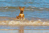 DOG 19 KH0015 01