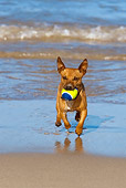 DOG 19 KH0016 01