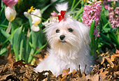 DOG 19 LS0002 01