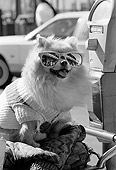 DOG 19 MQ0002 01
