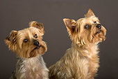 DOG 19 MR0002 01