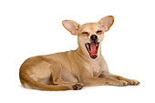 DOG 19 MR0007 01