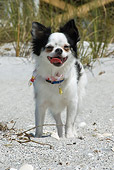 DOG 19 NE0001 01