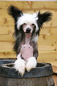 DOG 19 NR0002 01