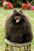 DOG 19 RC0001 01
