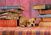 DOG 19 RC0004 01