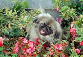 DOG 19 RC0005 01