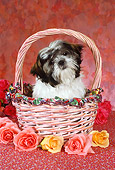 DOG 19 RC0006 01