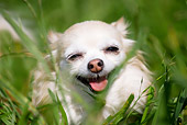 DOG 19 RD0009 01