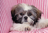 DOG 19 RK0007 04