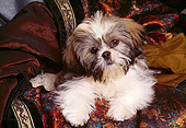 DOG 19 RK0010 04