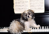 DOG 19 RK0014 06