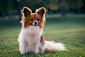 DOG 19 RK0016 06