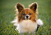 DOG 19 RK0016 11