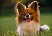 DOG 19 RK0016 12