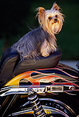 DOG 19 RK0039 02