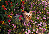 DOG 19 RK0044 10