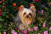 DOG 19 RK0044 14