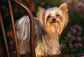 DOG 19 RK0045 05