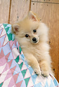 DOG 19 RK0055 17
