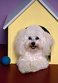 DOG 19 RK0062 02