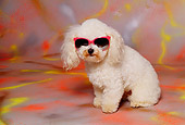 DOG 19 RK0069 05