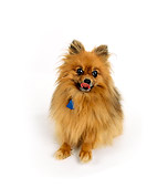 DOG 19 RK0100 01
