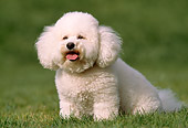 DOG 19 RK0102 04