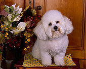 DOG 19 RK0121 07