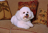 DOG 19 RK0127 04